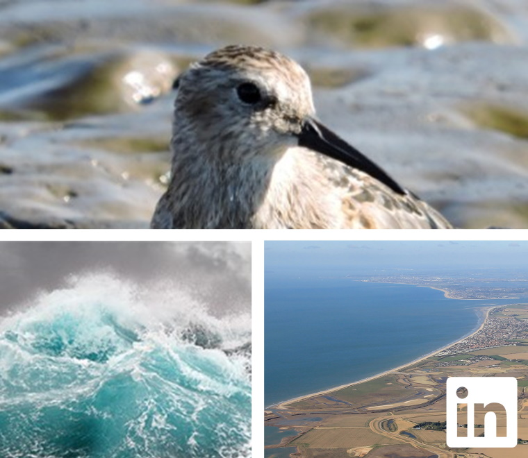 Photo collage of a waterbird, stormy seas and an aerial photo of a coastline